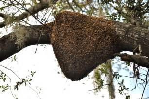 honey bee hives picture 9