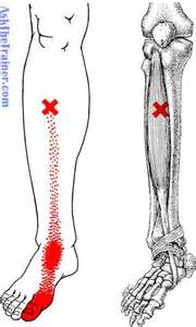 ask jeevee muscle pain picture 13