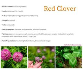 red clover breast cancer picture 11