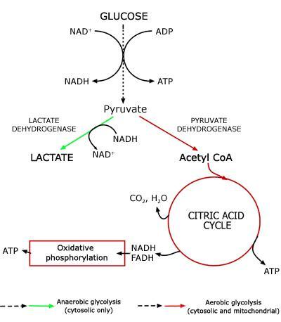 lactic picture 1