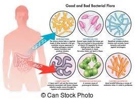 el flora dysbiosis picture 5