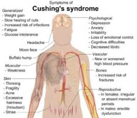 cushings disease in the aging picture 15