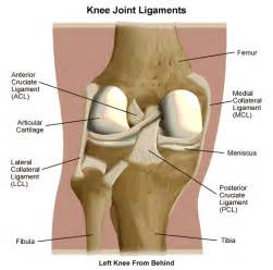 medial knee pain + joint space picture 17