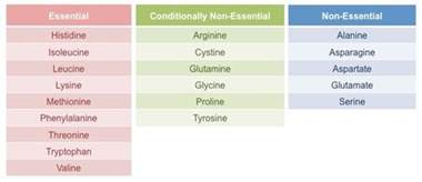 what foods with amino acids and enzemes make picture 15