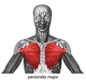 do torn attachments of the pectoralis muscle need picture 1