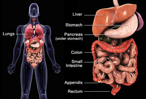 intestinal tract cancer symptoms picture 3