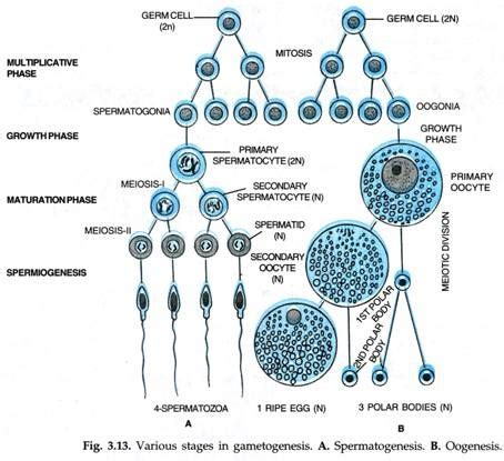 cell skin reproduction picture 5