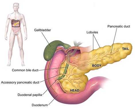 diet for pancrea is picture 2
