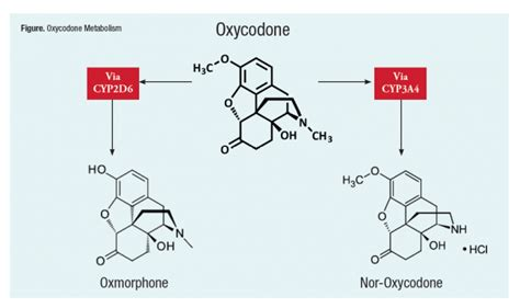 oxycodone and elevated liver enzymes picture 6