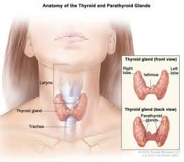 enlarged thyroid no nodules picture 14