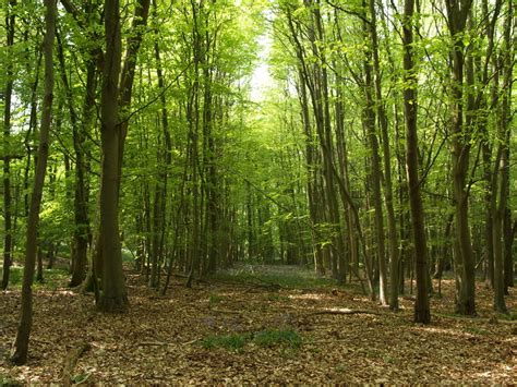 woods picture 1