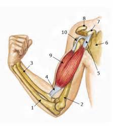 arm and muscle pain picture 10
