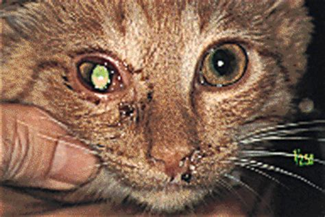 animal herpes picture 7