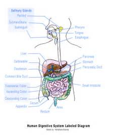 digestion diagram picture 9