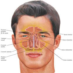 pressure on nose ans front h picture 10