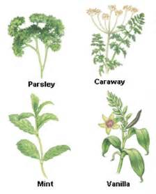 examples of herbal medicine picture 2
