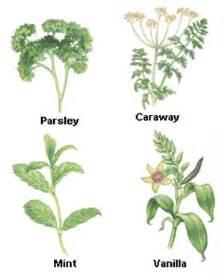 orden examples of herbal medicine picture 11