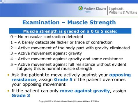 what is the definition of muscle strength picture 11