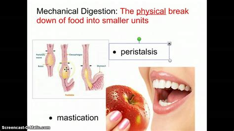 what chemical reaction is involved in digestion picture 3
