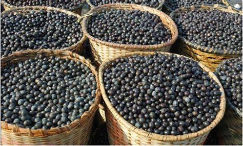 acai berry side effects picture 3