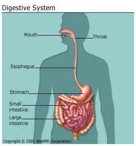 diabetes and bowel movements picture 13