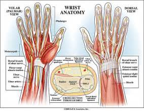 joint pain in wrist area radiating down mid picture 2
