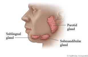 what does a small hterogeneous thyroid gland mean picture 14