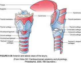 thyroid area picture 11