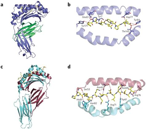 androgen receptor herbs picture 14