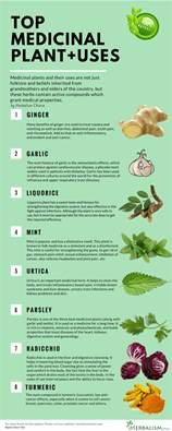 medicinal plants and their uses in the philippines picture 3