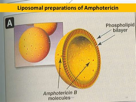 amphotericin injection for bladder irrigation picture 6