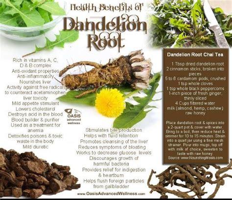 benefits of dandelion root picture 6