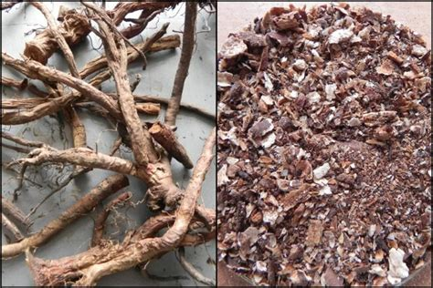 dandelion root coffee picture 6