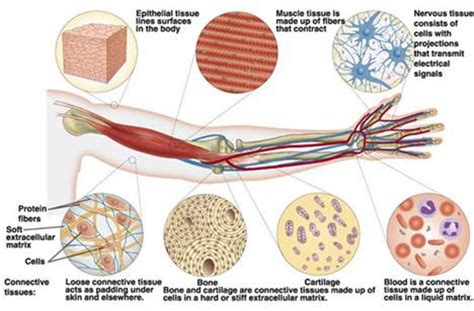 four protective functions of the skin are picture 7