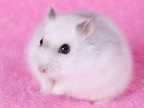 hamster h picture 15