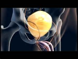 animation of male human ejaculation picture 17