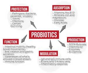 benefits of probiotics picture 9
