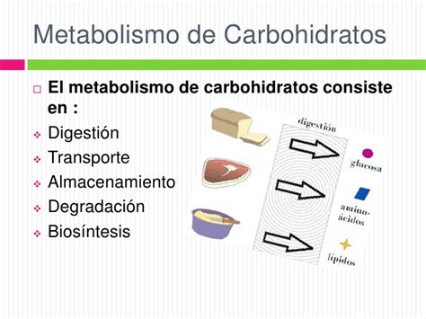 digestion and metabolism picture 13