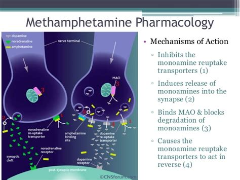 appetite stimulant drugs picture 5