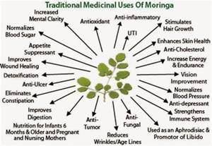 makahiya plant health benefits picture 6