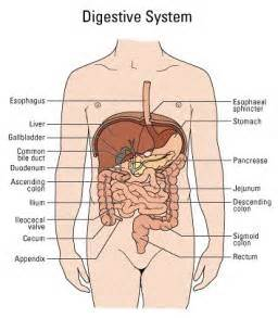 internal el syndrome picture 6