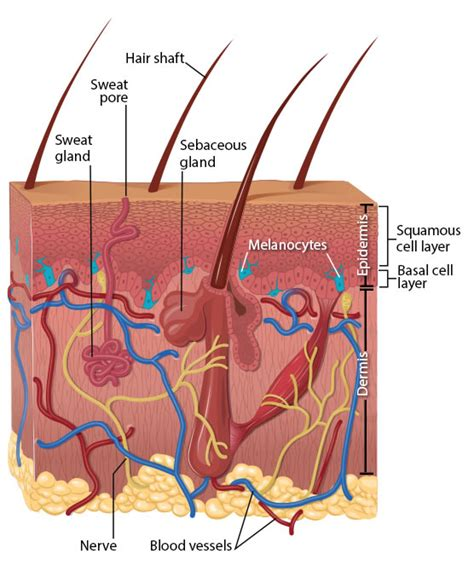 cellphone skin picture 15
