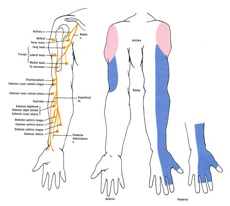 canine joint pain picture 15