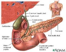 food for bad gall bladder picture 5