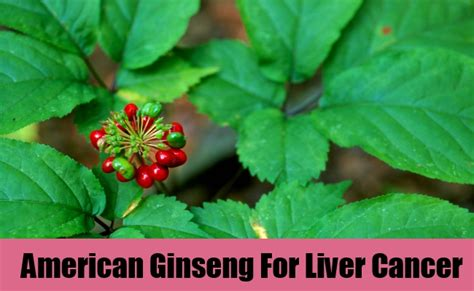 herbal remedies for liver cancer picture 10
