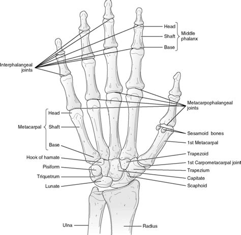 metacarpal phalangeal joint measurement picture 6