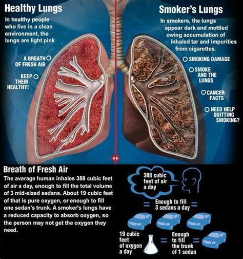 affects of cigar smoke on lung tissue picture 4