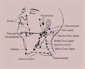 thyroid enlarged thyroid lymph picture 13