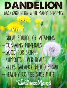 benefits of plantain herb picture 3