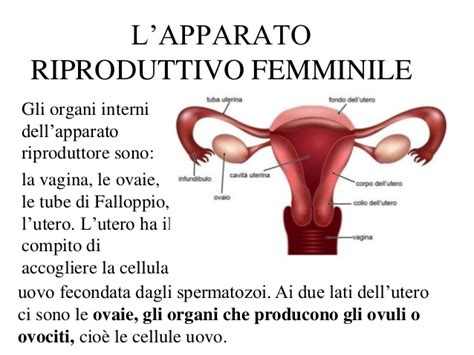 steelwratjes vulva picture 7
